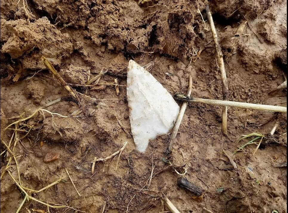 indian arrowhead in field