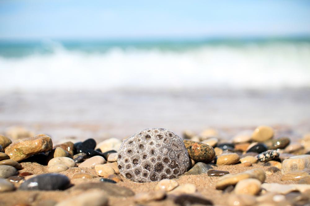 petoskey stone on shore in michigan