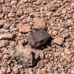 hunting for meteorites in arizona