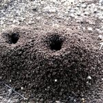anthill garnets where to find them